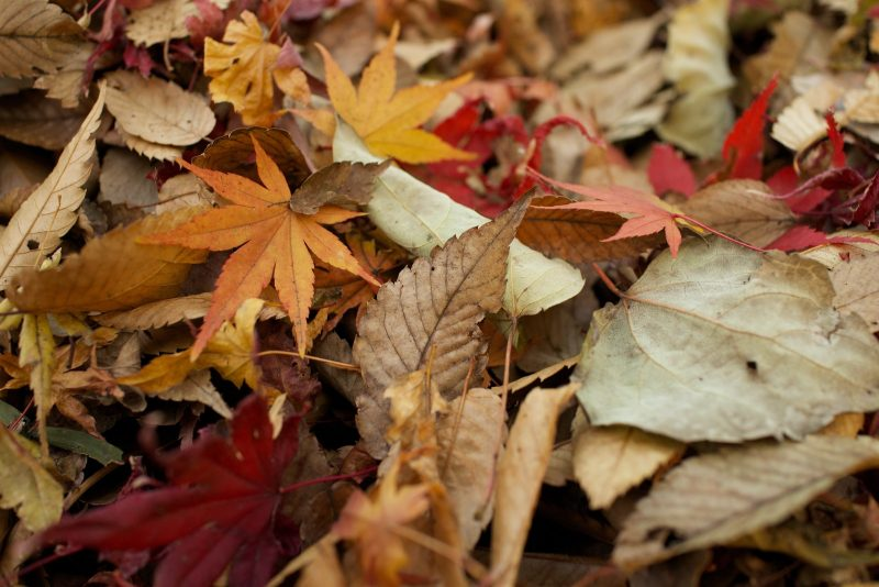 assorted dried leaves